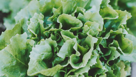 leafy greens lower stress whole harvest