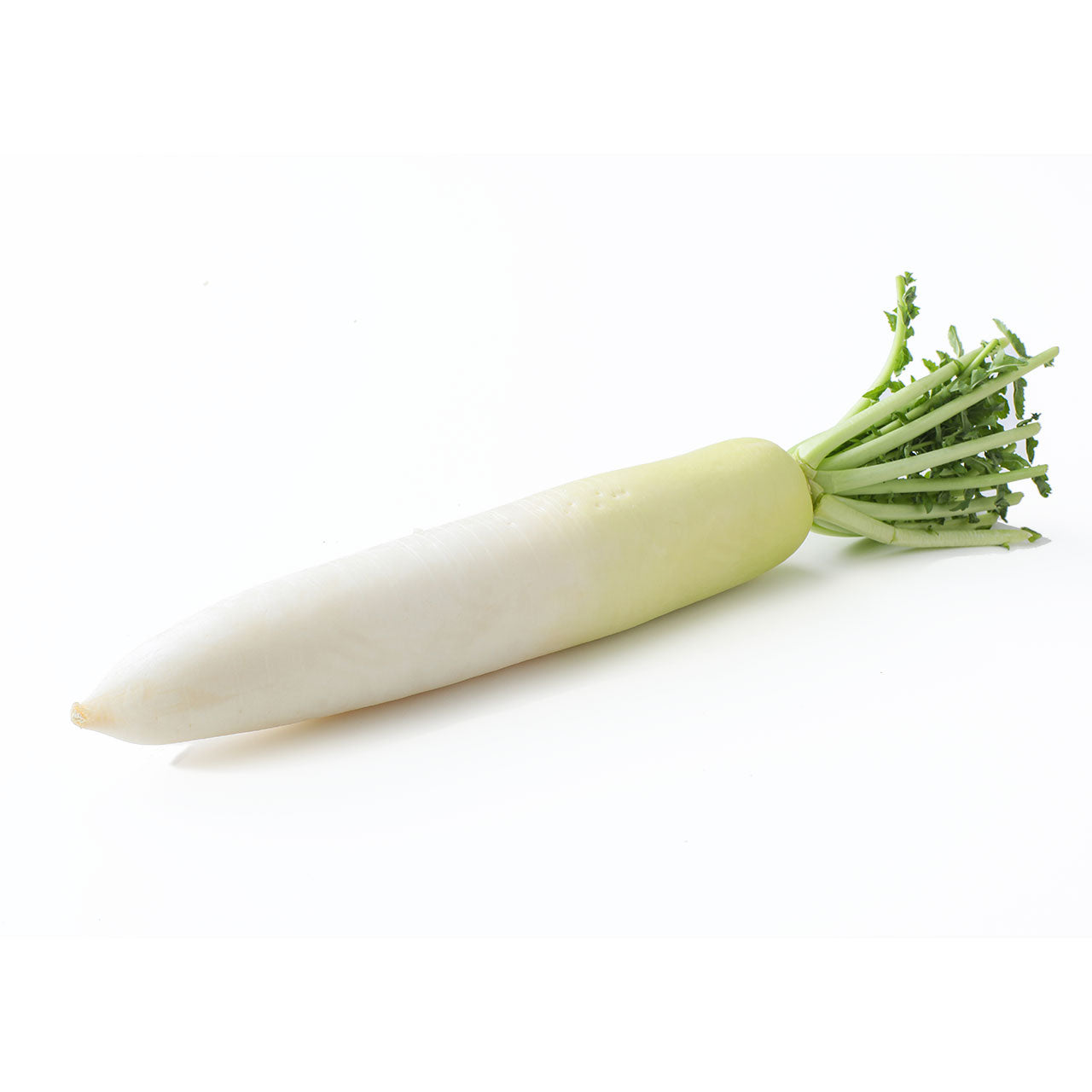 Aokubi Daikon Radish Each Japanese Grocery Deliver to NY NJ