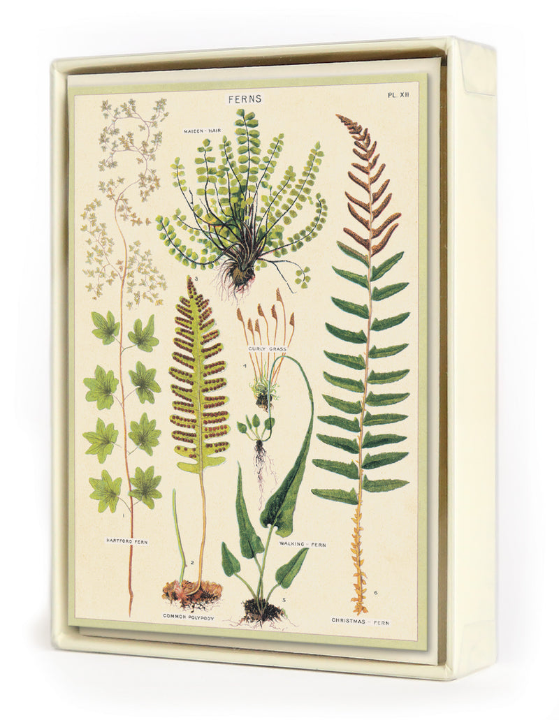 Fern Boxed Notecards