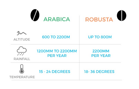 Arabica Robusta Keyfacts