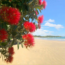Load image into Gallery viewer, Pohutukawa Greeting Card