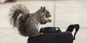 squirrel perched on camera bag