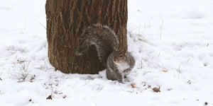 squirrel on snowy ground next to tree trunk