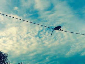 monkey traveling across power line