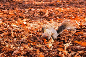 Protect Your Home from Squirrel Damage This Autumn