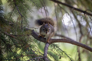 squirrel prevented from access power lines due to critter guard