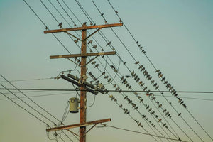 Protect Your Power Lines from Flocking Behavior