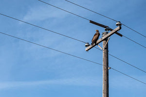 The Impact of Birds of Prey on Power