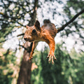 power line protection for squirrels