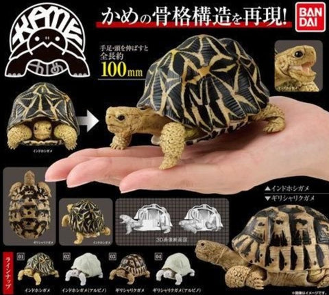 Bandai Indian Star Tortoise Turtle Gashapon Part 1 4 Collection Figure Set