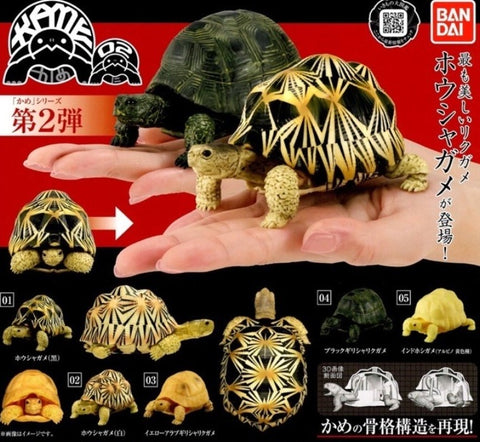 Bandai Indian Star Tortoise Turtle Gashapon Part 2 5 Collection Figure Set