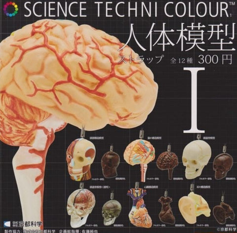 Kitan Club Science Techni Colour Human Anatomy Model Gashapon Part 1 12 Swing Strap Figure Set