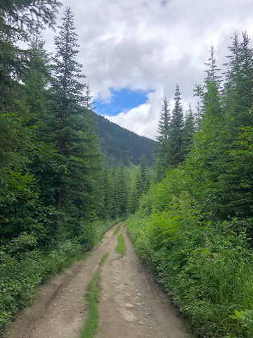 Logging Road Approach to Marriott Basin Trail