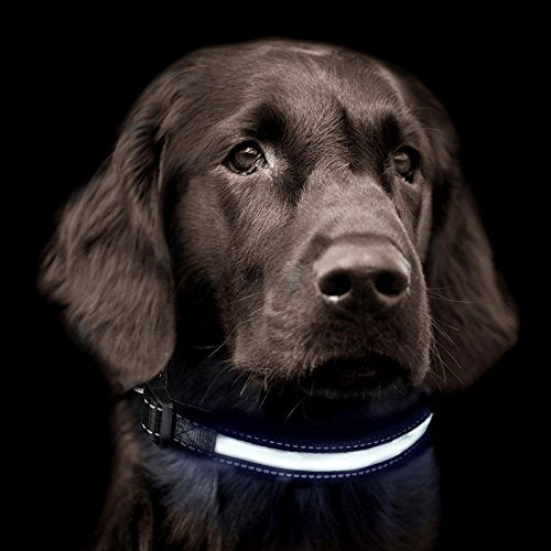 Solar Charging  Reflective LED Dog Collar