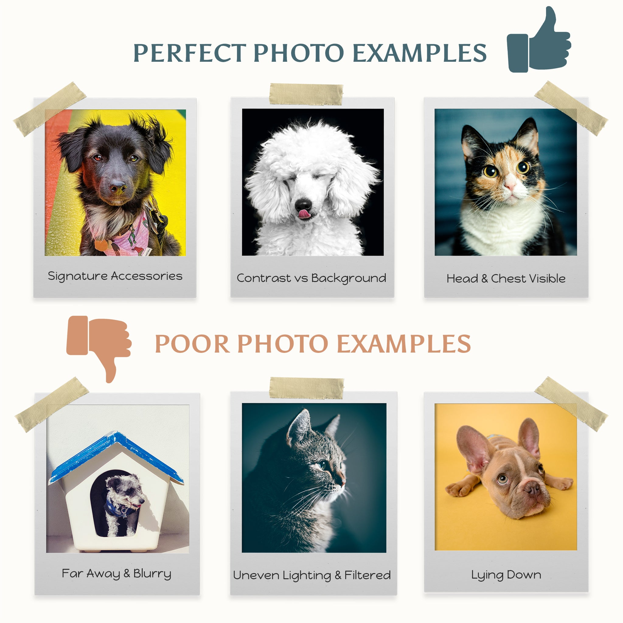 Perfect photo of pets to upload: head and chest visible, contrast between pet and background, including signature accessories. Poor pet photo examples: far away and blurry, uneven lighting and filtered, pet laying down.