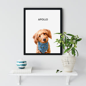 pet portrait  Apollo Dog