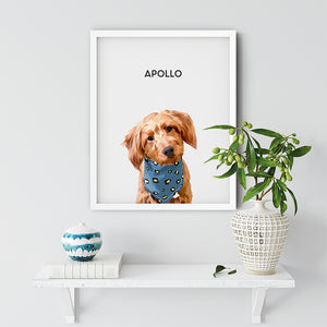 pet portrait from photo of Apollo the dog