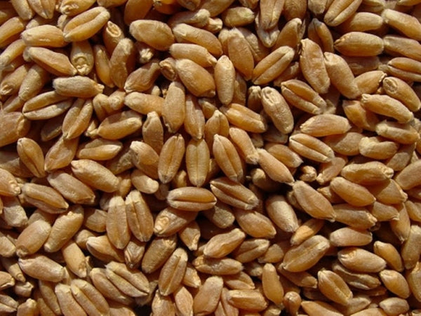 BULK GRAINS: Organic Grains Hard Red Spring Wheat, 25 lb