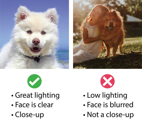 Custom dog products image guidelines