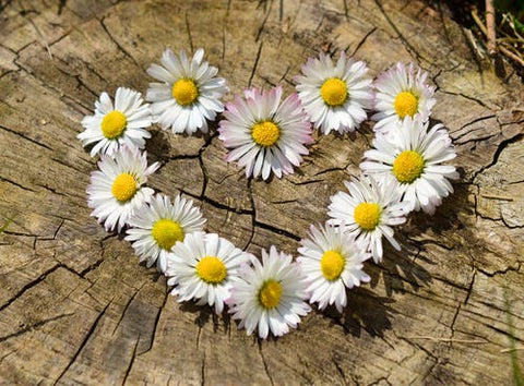 Heart made out of daisies