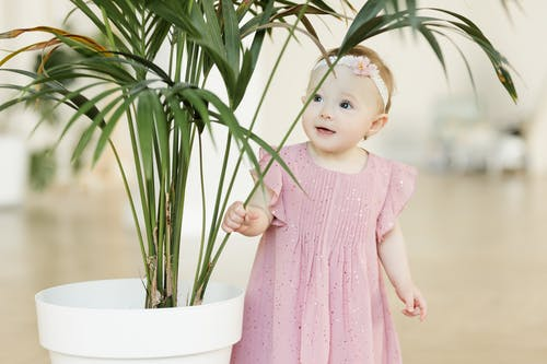 A toddler girl wears a pink dress and peeks out from behind a houseplant