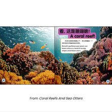 Load image into Gallery viewer, 美国国家地理儿童小百科 中英文双语读物(套装共6册)National Geographic Children's Encyclopedia, Chinese and English bilingual books (set of 6 volumes)