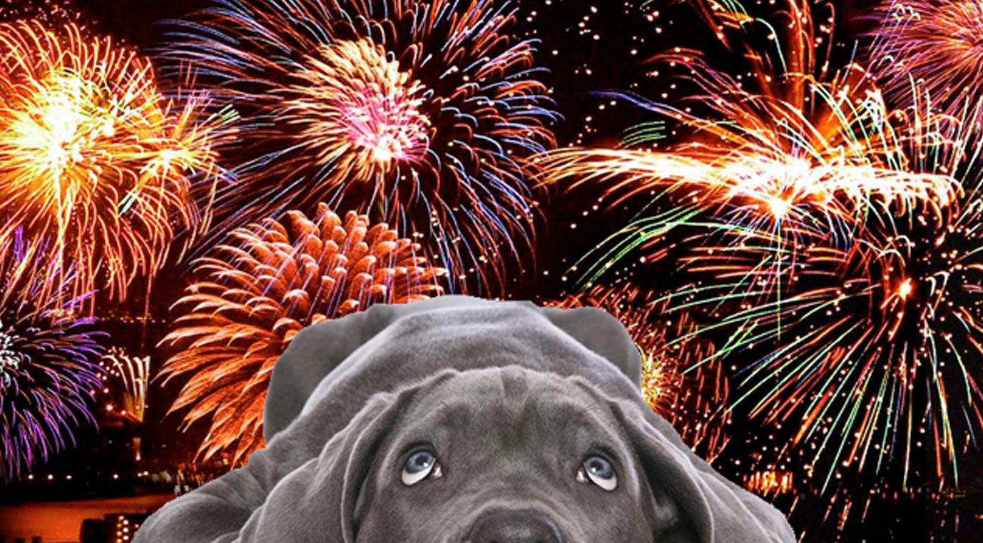 Is your dog scared of fireworks?
