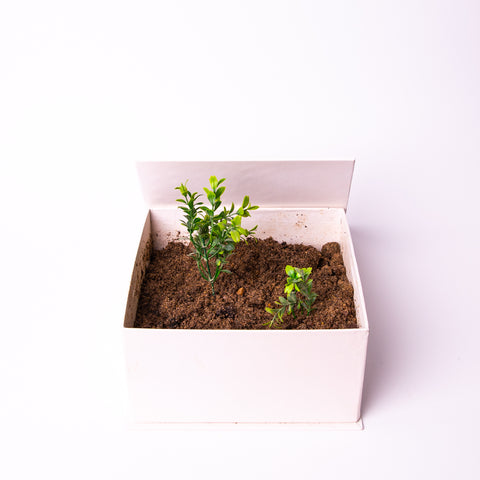A white giftopiia gift box in fully white space, containing soil and growing plant.