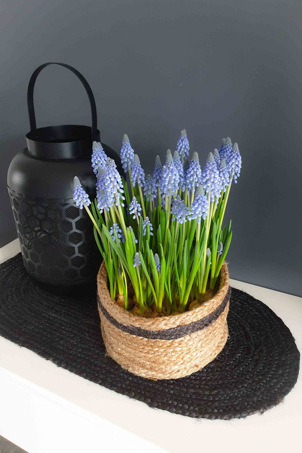 VERVE - MULTIPURPOSE JUTE BASKET / Planter - ART AVENUE