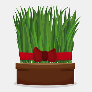 SUPER FOODS: Supercharge Your Body With Nutrition Wheatgrass