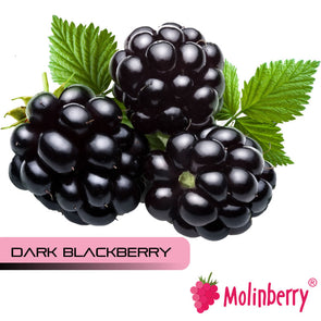 Dark Blackberry by Molinberry