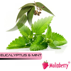 Eucalyptus & Mint by Molinberry