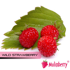 Wild Strawberry by Molinberry