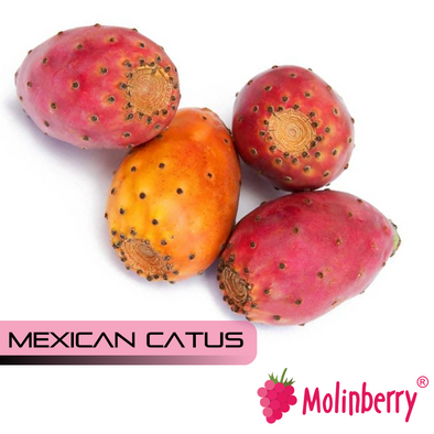 Mexican Cactus by Molinberry