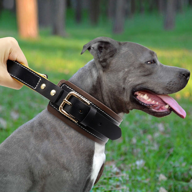 Real Leather Pet Dog Collar Adjustable Padded Dog Collars With Handle For Medium Large Dogs.