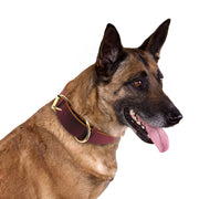Dog Collar Genuine Leather Pet Collars For Small, Medium and Large Dogs.