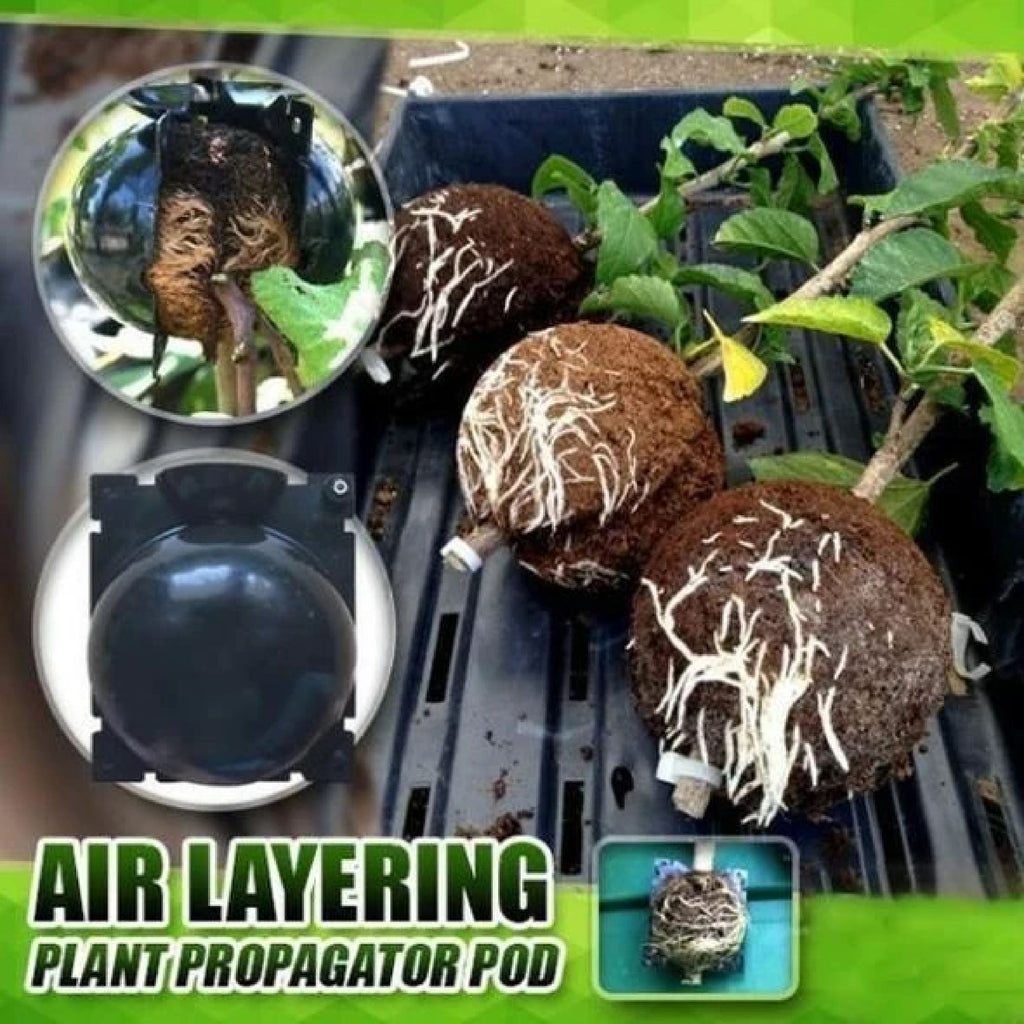 Plant Root Growing Box-Revolutionary Air-Propagation System trillionwish Small (Plant Stem Size at 3mm-9mm)