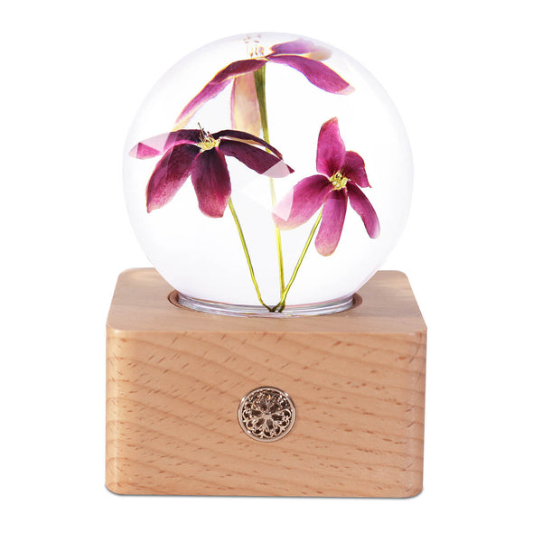 cute night light Night Light Rangoon Creeper Crystal Ball LED Night Light