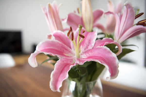 How to Buy Lilies in Mississauga