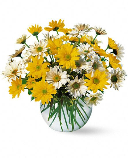 EFM118 Dashing Daisies - Euro Flowers Mississauga ON