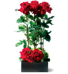 EFV104 Scarlet Splendor Roses - Euro Flowers Mississauga ON