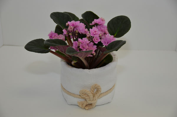 EFM 129 African Violet - Euro Flowers Mississauga ON