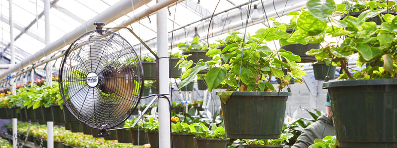Maxx Air's 18 inch wall mount fan provides a powerful cooling breeze in a humid nursery greenhouse full of growing plants.