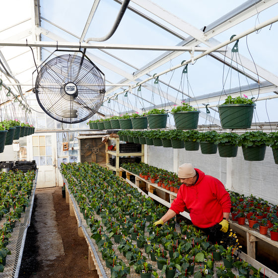 The 18 in. wall mount aids in temperature control in a greenhouse.