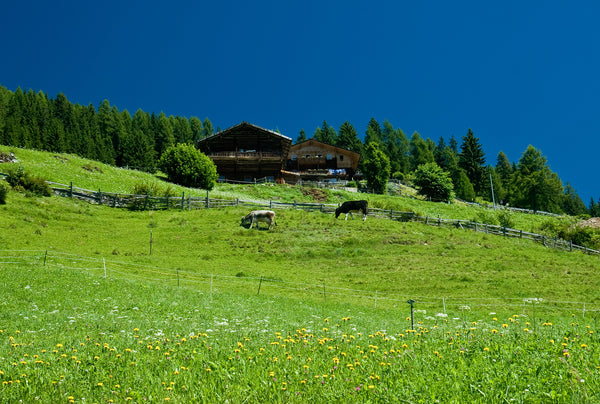 Flowery meadows in the Alps