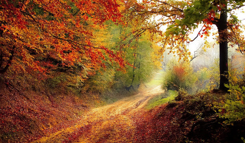 A leaf-strewn path winds through a beautiful autumn forest, the end lost in mist.