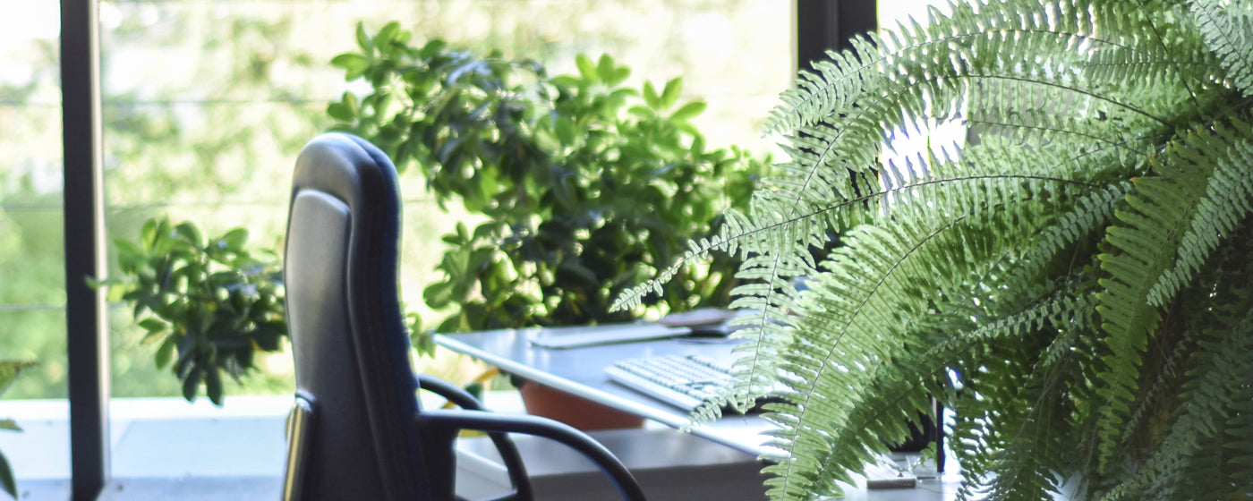11 ways to be more sustainable in the workplace