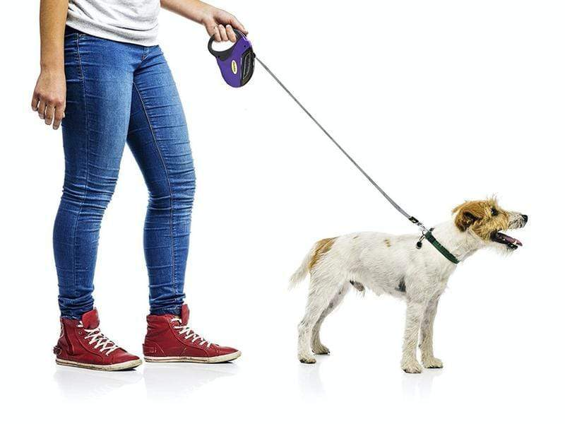 5m Retractable Dog Leash Snatcher Online Shopping South Africa