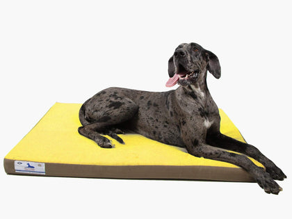 Dog-O-Pedic Memory Foam Orthopedic Mattress Snatcher Online Shopping South Africa