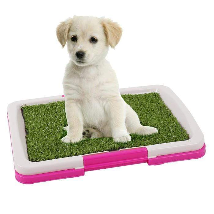 Puppy Potty Pads Large Snatcher Online Shopping South Africa